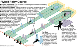 flyball_sm